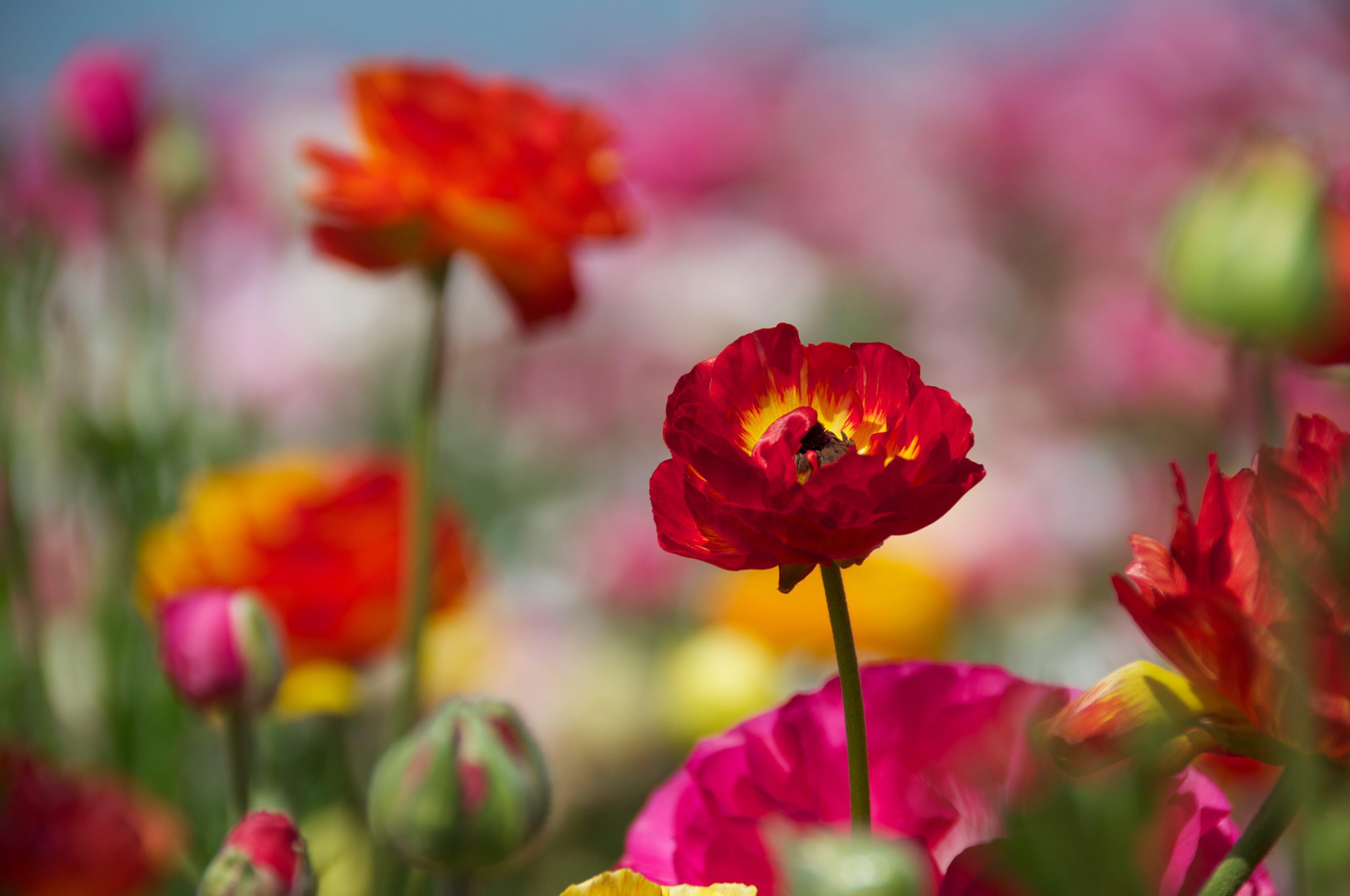 Garden Responsibly – By Applying Responsibly