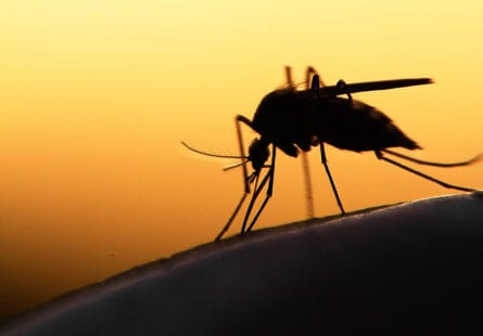 greenlid-envirosciences-mosquito