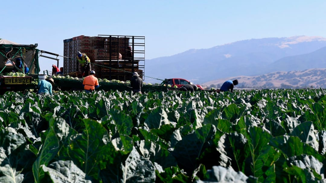 This Trump rule change will mean lower wages for farmworkers