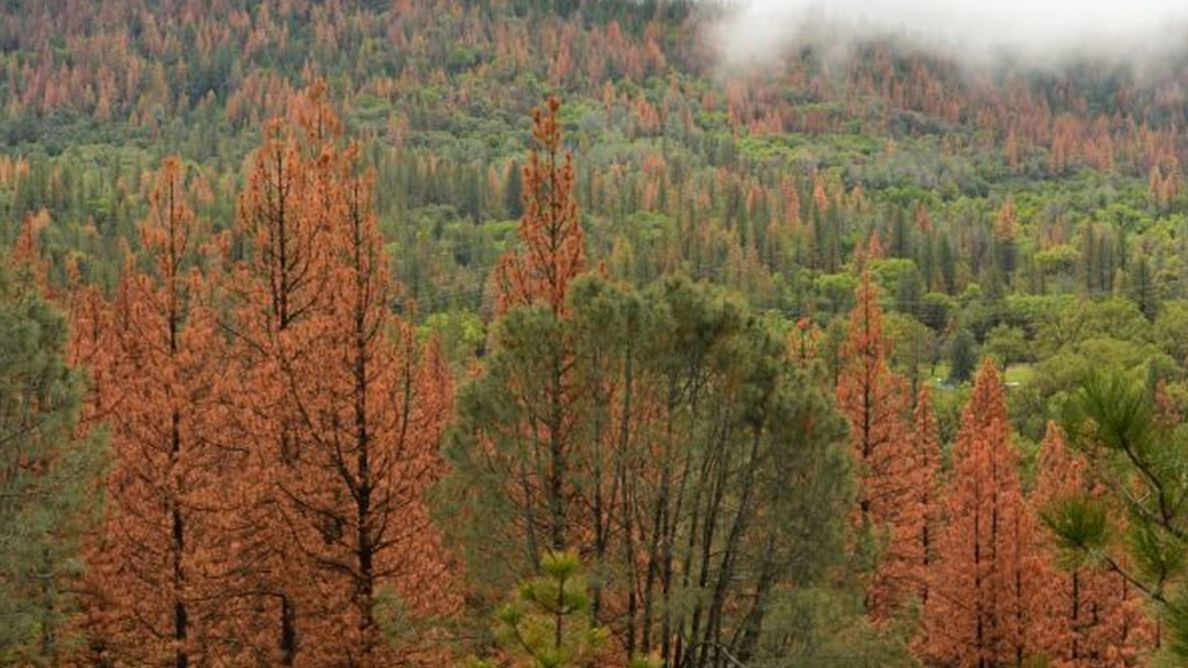 Bloomberg's plan for fire and forest protection