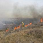 Virus will not extinguish wildfire protection, Newsom says