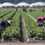 Newsom signals more protections coming for essential workers, including hotel rooms for farmworkers