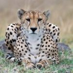 Trophy hunting produces little revenue for African countries