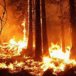 Five solutions to California's climate crisis Gov. Newsom should implement … right now