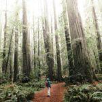 "California's ancient ""asbestos"" forests no longer seem immune"